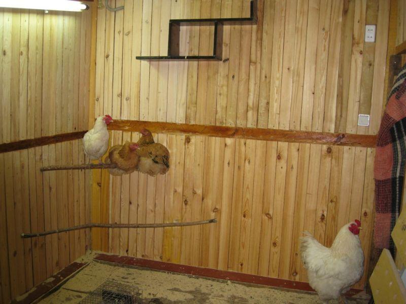 Дереванные полы в курятнике