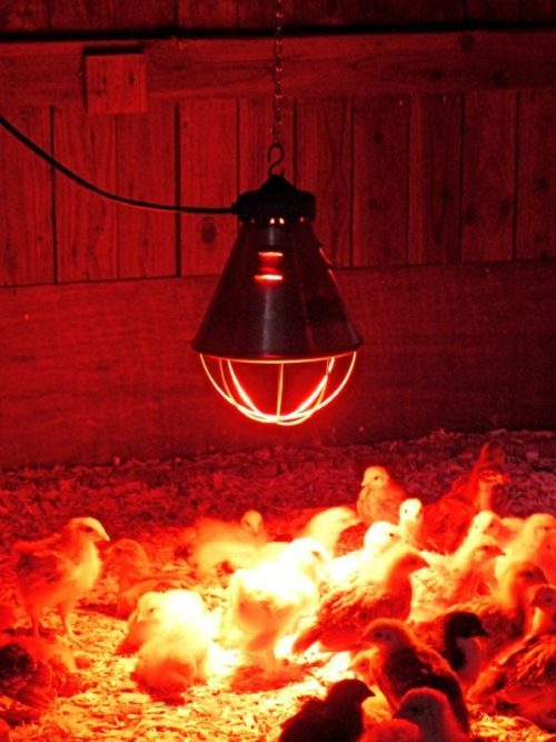 Лампа инфракрасного излучения