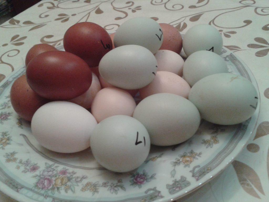 Яйца Леграбрских кур