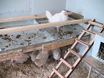 Одноярусное строение для кур