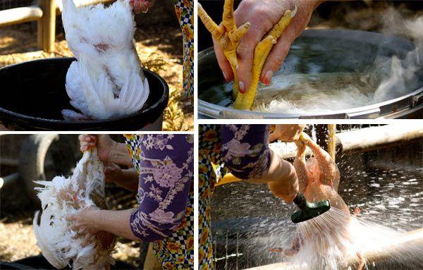 Процесс избавления от перьев