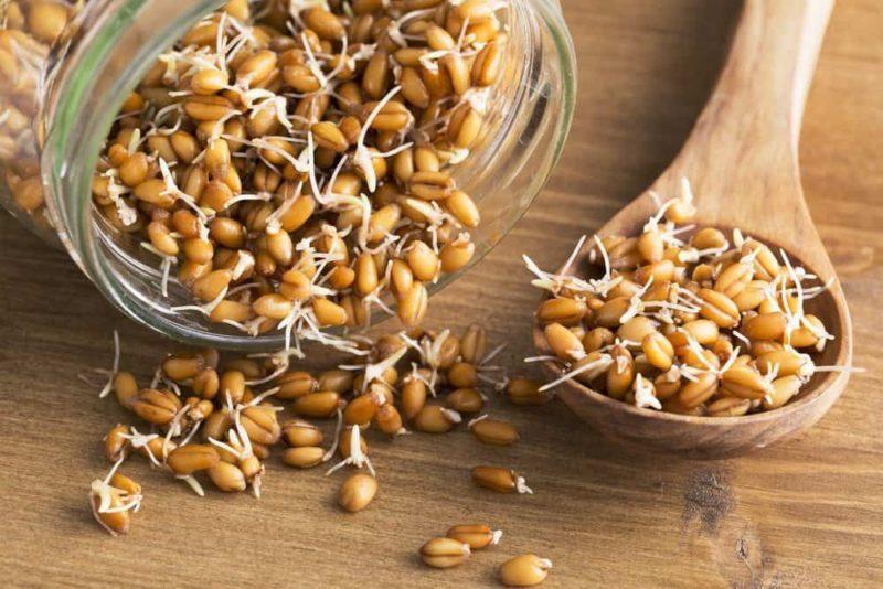 Пророщенное зерно пшеницы