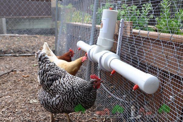 Поилка для куриц