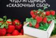 Чудо ягодница Сказочный сбор