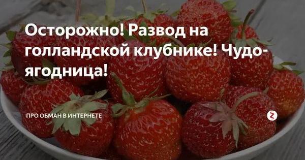 Отрицательные отзывы о чудо-ягоднице