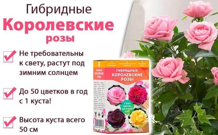 Свойства гибридных королевских роз